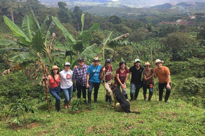 Recorrido sobre el café: Pruebe y viva la auténtica experiencia de café colombiano, Cali, COLOMBIA