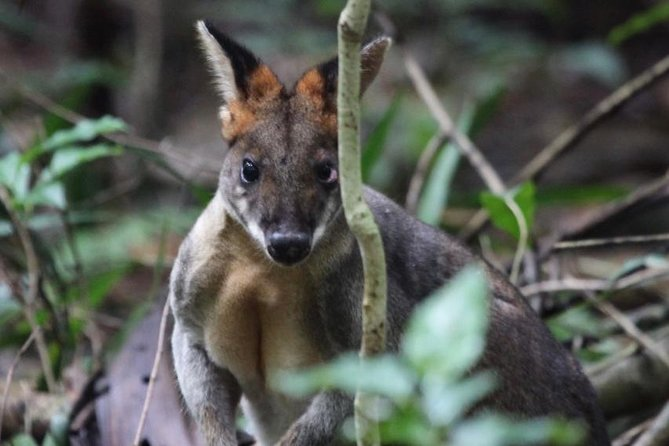 Small-Group 4WD Springbrook National Park Day Trip from Brisbane, Brisbane, AUSTRALIA