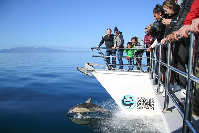 Auckland Dolphin and Whale Watching Eco-Safari Cruise, Auckland, New Zealand