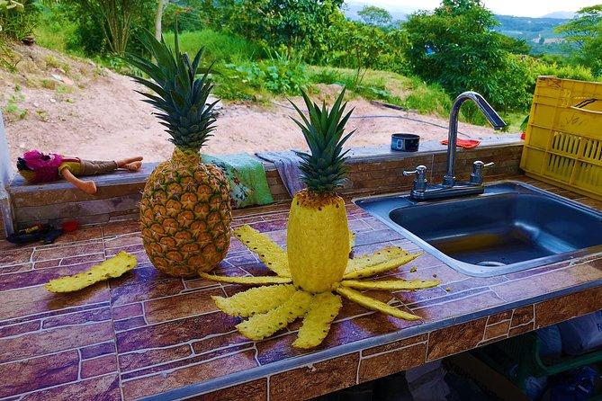 Tour Privado - Tour de Piña (Cultivos), Bucaramanga, COLOMBIA
