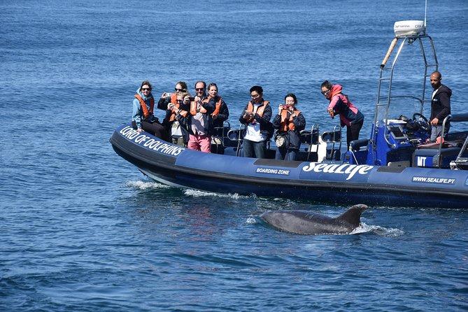 Sealife - Dolphin Watching - Marine Biologist's - Lagos, Lagos, PORTUGAL