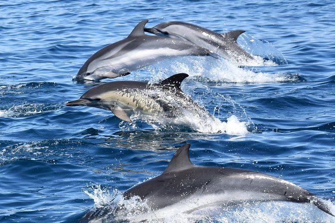 Sealife Dolphin Watching with Marine Biologists, Lagos Algarve, Lagos, PORTUGAL
