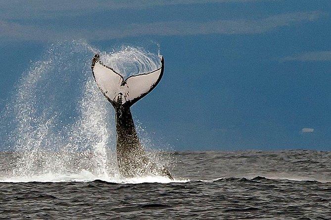 2-Hour Maui Whale Watching Cruise! (Ma'alaea Harbor), Maui, HI, UNITED STATES