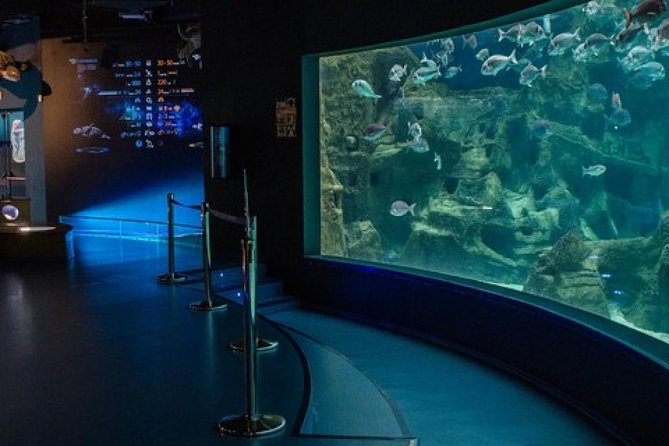 Heraklion City Tour-Market-Creta Aquarium, Heraclion, GRECIA