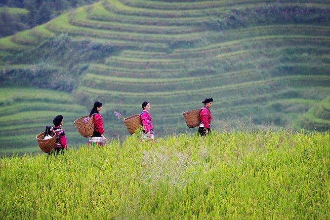 Day Trip to Longji Rice Terraces and Minority Village from Guilin with Lunch, Guilin, CHINA