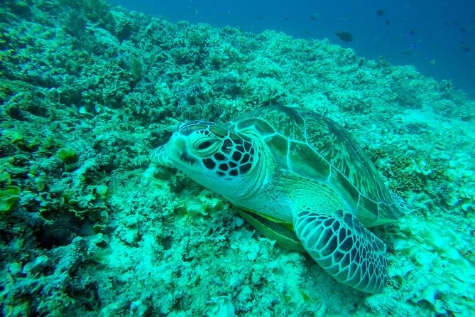 Turtle want to say hello.<br>Open snorkeling tour program and visiting 5 beautifull sport underwater 3 gilis island. <br>Trip duration 4 hours by glass bottom boat. <br><br>Include:<br>1.snorkel equipment<br>2.life jacket<br>3.comfortable glass bottom b<br><br>Having a good experience with us.<br>Comfortable and enjoyable will be guaranteed. <br>Joint us in explorer a wonderful life underwater. <br>Your satisfaction is our priority.!