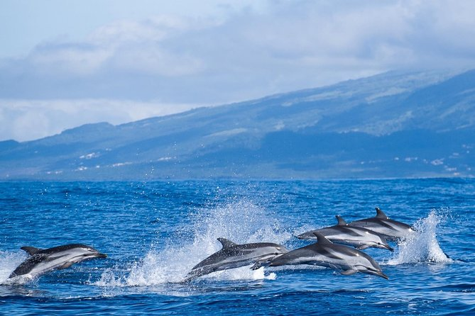 Whale and Dolphin Watching Tour at Terceira Island, Terceira, PORTUGAL