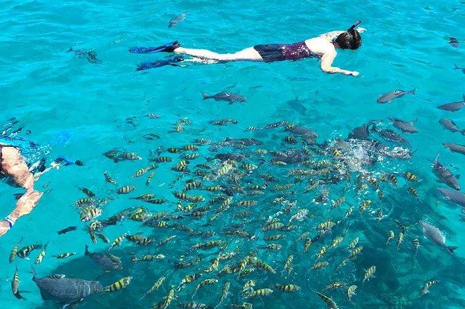 2 stop snorkeling adventure and chocolate factory, Roatan, HONDURAS