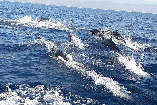 Dolphin,Whale,Turtle Watching, Puerto Escondido, MÉXICO