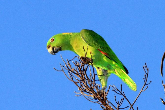 Birdwatching Day to Finca la Gracia (From the Cruise Ship, Puerto Quetzal), Puerto Quetzal, GUATEMALA