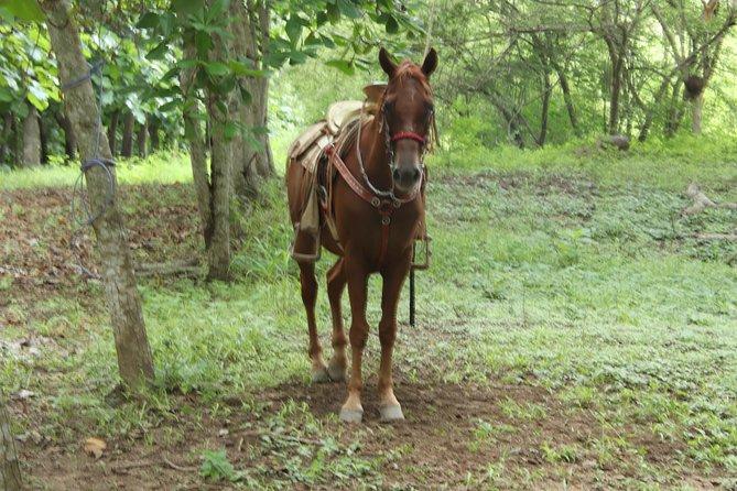 Jungle Horseback Riding Tour, Bucerias, MEXICO
