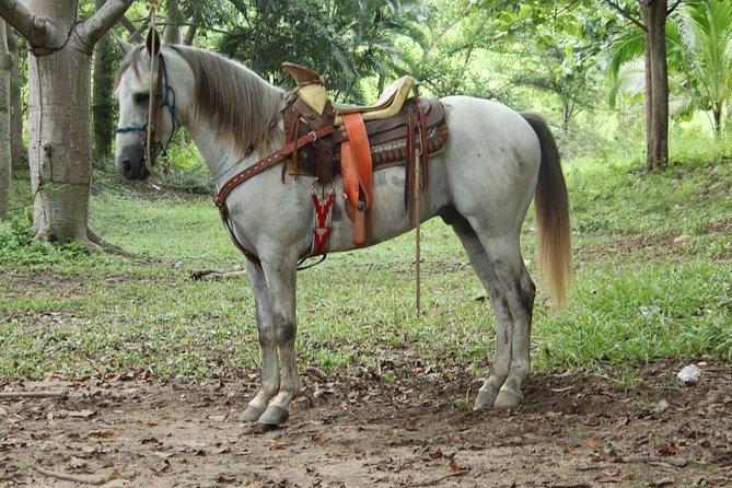 Combo ATV Tour (one bike for two adults) + Horseback Riding Tour (two horses), Bucerias, MEXICO