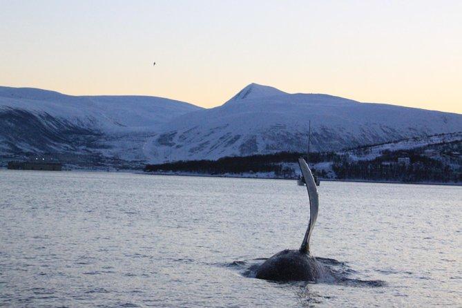 From Tromso all-inclusive Whale and Seabird Safari by Boat to Skervøy, Tromso, NORUEGA