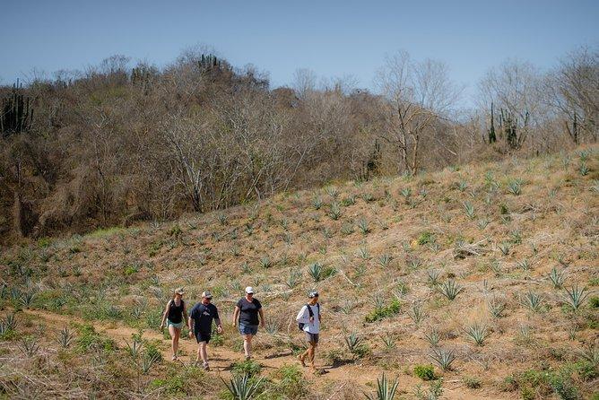 Excursión de senderismo por el sendero Blue Agave Trail desde Mazatlán, Mazatlan, MEXICO