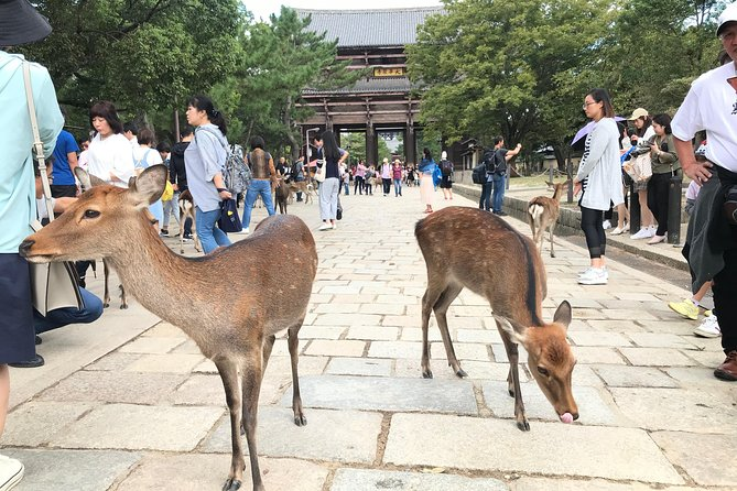"Private VIP Tour in NARA allows you to ""Customize Your Itinerary"" to fit your specific travel expectations. <br><br>You have your own private car and driver who can speak English for approximately 5 hours.<br><br>Our team assists you to manage the tour, give recommendations, make reservations and check information.<br><br><<< You customize your own Half Day Trip in NARA>>> <br><br>STEP1: We propose list of famous destinations while you share with us your travel desires and special requests. <br><br>STEP2: With careful communication and planning, we share and exchange our draft detailed itinerary.<br><br>STEP3: We revise/finalize the itinerary.<br>***You can always change the itinerary even on the day while traveling on the van. Please feel free to reach our team and driver for recommendation at any time. <br>***1 FREE pocket wi-fi to be used on board.<br>***Extra charges will be applied for over time service."