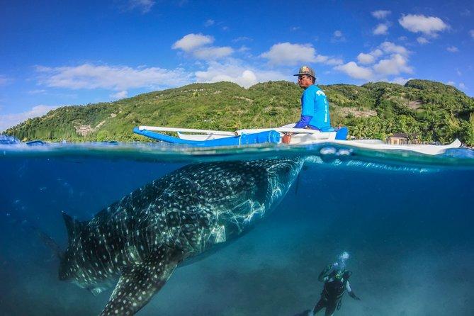 Oslob Whale Shark Watching + Bluewater Sumilon Island Day Tour, ,