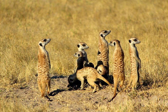 12-Day Desert and Delta Express Adventure Camping Tour from Livingstone, Livingstone, Zimbabwe