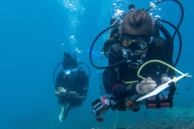At Conservation Diver Indonesia, we provide decades of experience in marine conservation science and research to provide participants with a high standard of education in coral reef ecology, monitoring, coral nursery and artificial reef construction and maintenance, amongst many other subjects. Students can be certified in our globally recognized courses and join us in our mission to fight for our coral reefs by becoming the next generation of Conservation Divers and join the dozens of Conservation Divers that have gone on to pursue careers in marine conservation and science.