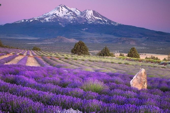 Visit the fields of lavender and the gorges du verdon., Niza, FRANCIA