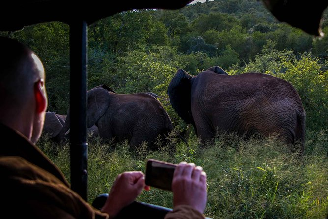 Imagine witnessing Leopard stalking, Elephants close by or Hippos grazing. A Night Drive Safari offers some truly amazing thrills and sightings.
