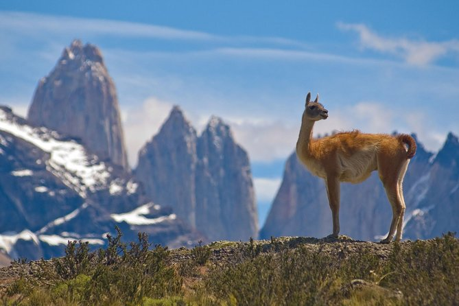 Full-Day Tour to the Torres del Paine National Park, El Calafate, ARGENTINA