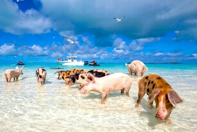 Grand Bahama Ferry Day Trip from Port Everglades with Pig Swimming Option, Fort Lauderdale, FL, ESTADOS UNIDOS