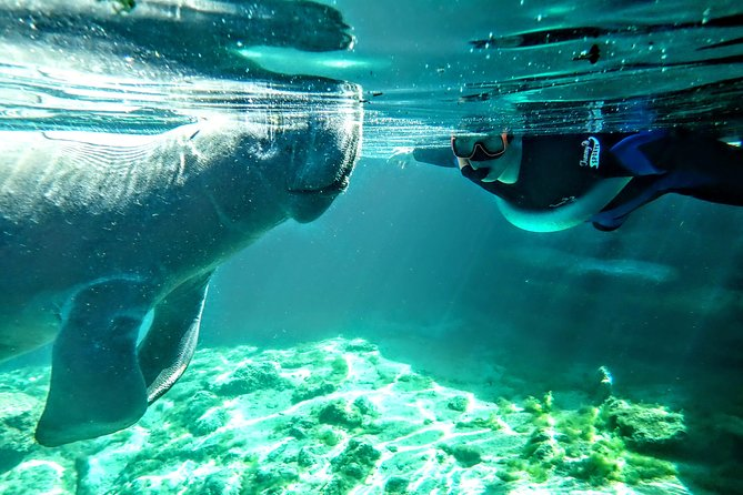 """Want to swim with the manatees but looking for a more private experience? Book a private tour for just your group to have the boat all to yourself. On this tour, you can bring up to 10 guests for the same price. Call for larger groups. We are committed to transparency, so all gear is included and there are no additional charges for anything!! <br><br>Our boats are US Coast Guard Certified meaning they can safely accommodate more than 6 passengers, have all necessary safety equipment, and are in tip top shape. Dont fall for the """"small tours"""" of """"only 6"""" and get stuck on a clunker! Book with Explorida!! <br><br>Swimming with the manatees is a once in a lifetime experience so do it right! Dont cram into a small dive shop. Spread out and enjoy plenty of space at Explorida! The Explorida Adventure Center offers a large, top notch facility that is climate controlled with indoor changing rooms for your privacy. We are dedicated to the customer experience and will not disappoint! Let us prove it!"""