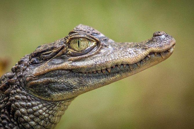 Everglades en Español - mañana o tarde, Miami, FL, ESTADOS UNIDOS