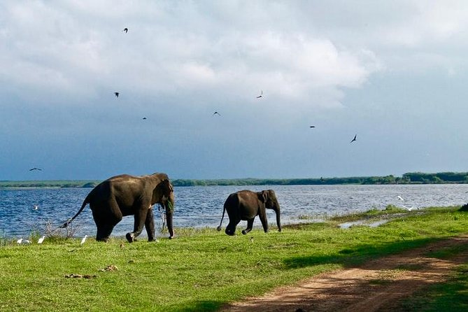The Udawalawa national park was created to provide a sanctuary for wild animals displaced by the construction of the Udawalawe Reservoir on the Walawe River, as well as to protect the catchment of the reservoir. The reserve covers 30,821 hectares (119.00 sq mi) of land area.<br><br>It is a popular tourist destination and the third most visited park in the country. This is one of the renowned and best places in the world to see wild Elephants. It is not unusual to see big herds gathering to feed and bath by the waterholes. In addition, Udawalawe is home to many water monitor lizards, monkeys. variety of bird species and offer you glance at water buffalo, wild boar, spotted deer, sambur deer, jackal, samber, black-naped hare, mongooses, bandicoots, foxes, the endemic Toque Macaque and Gray Langers.