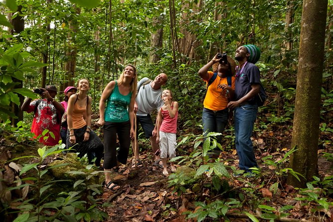 An excellent excursion for nature lovers! St. Lucia possesses a topography and ecology of stunning beauty, matched by no other location in the Caribbean. Take a short walk along a forest trail to the heart of the lush green forest to experience the tropical flora and fauna up close!