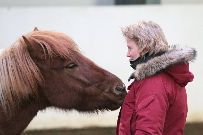 If you would like to experience the Icelandic horse both in terms of riding and information, but doesn't feel like going on an outdoor ride, this is the option for you. It's a perfect pick on a bad-weather day, for families with smaller kids but also for anyone who might just prefer an indoor arena experience. <br><br>You will receive both cultural, historical and characteristic information on the Icelandic horse as well as enjoy the change to interact with them in the stable. Furthermore, the ride in the arena will give you a chance to really make use of your instructor and gain new riding skills while having fun. Since we specialize in small groups, there will be plenty of space for all riders in our big arena and if someone might prefer to watch, there is space on the tribune.<br>Finish off the tour in our cafeteria with a hot drink.<br><br>We are located 1 hour drive south of Reykjavik. <br>Age limit: 10 years<br>Weight limit: 110 kg/242 lbs