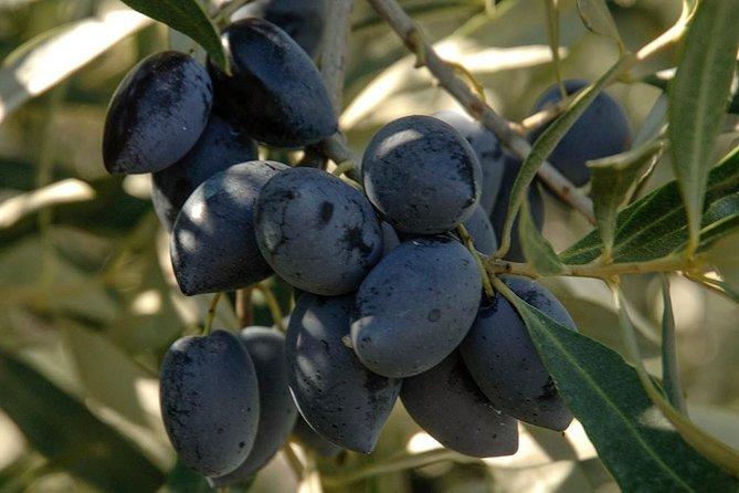 Greek pasta making & Olive oil tasting in Messinia, Greece!, Kalamata, GRECIA