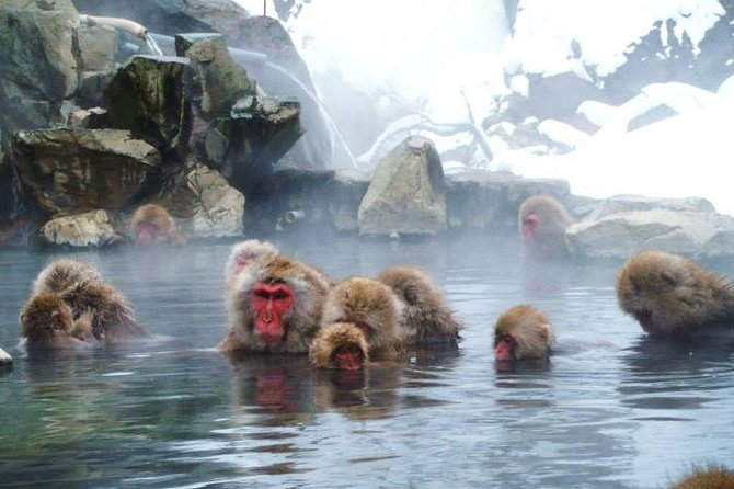 You will go around famous sightseeing spots in Hokushin (Northern Nagano) area. First, you will see the Jigokudani Wild Snow Monkey Park worldly known for its snow monkeys. Then you will go to Obuse Town, which is reputed for its town renewal project vitalizing the historical heritages such as Hokusai Katsushika.