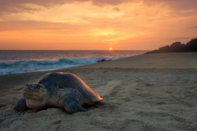 Turtle Nesting Tour, Tamarindo, COSTA RICA