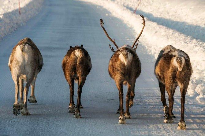 MAIS FOTOS, Arctic roadtrip