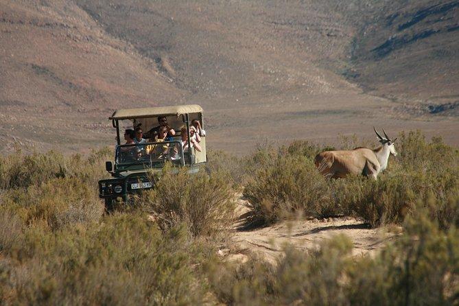 Excursão particular: safári Vida Selvagem partindo da Cidade do Cabo, Cidade do Cabo, África do Sul