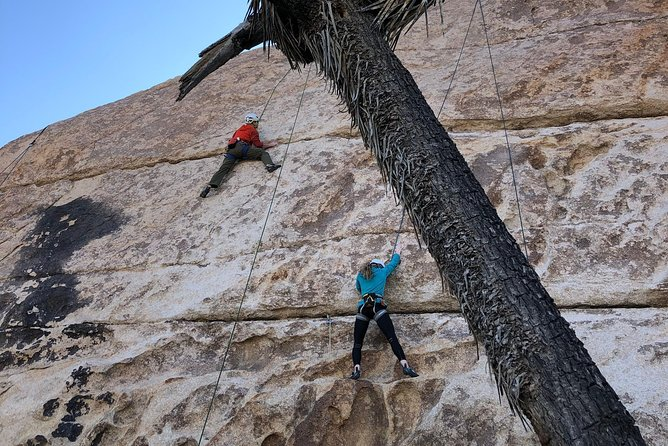 Join our certified local guides for a half day exploration of Joshua Tree National Park's world renowned rock climbing! Meet other travelers who, like yourself, have a healthy appetite for adventure, while learning the basics of the sport from an expert. See JTNP from a new perspective 100' up a wall of granite!