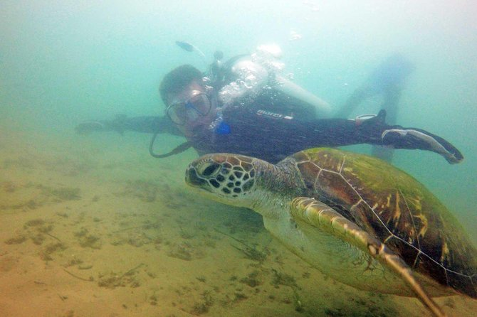 Wave Break Island Snorkel Tour on the Gold Coast, Gold Coast, AUSTRALIA