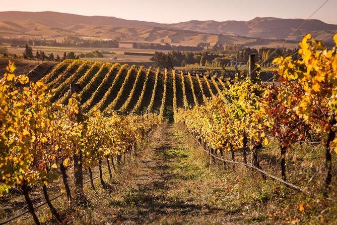 Waipara Wine Trail Afternoon Tour from Christchurch, Christchurch, NOVA ZELÂNDIA