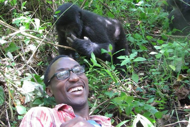 This 3 Day Gorilla Trekking Safari offers you the chance to see mountain gorillas in their natural habitat in Bwindi or Mgahinga Forest.<br>This safari reduces driving time and thus starts in Kigali where guests are picked before being transferred across the border to Uganda for the trekking. The major highlights are:<br>The hike through the tropical rain forest. Though the foremost activity is watching the gorillas. the beauty of the hike through one of the last remaining pristine wilderness areas is not to be taken for granted. <br>Watching mountain gorillas is an experience like no other. This close encounter experience will leave you in awe of these pacific giants who share 98% of our DNA.<br>And learn about the tremendous conservation efforts that saved mountain gorillas from the brink of extinction while creating a sustainable tourism model that supports locals in marginalised communities.