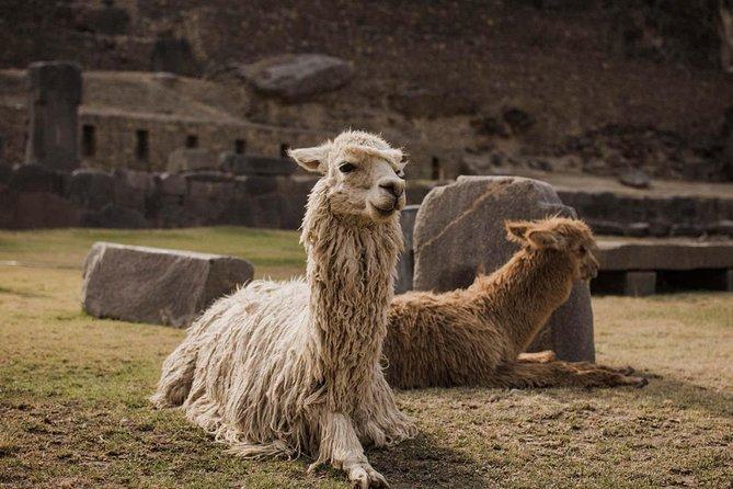 O melhor do Vale Sagrado (em grupo pequeno): Pisac, Maras, Moray e Ollantaytambo, Cusco, PERU