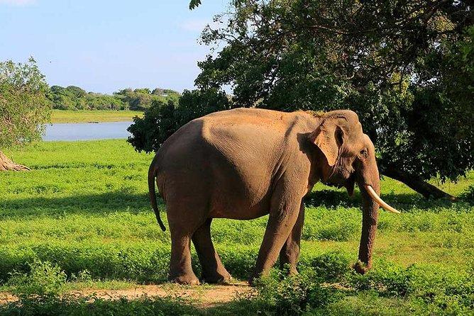 Yala National Park Safari, Parque Nacional Yala, SRI LANKA