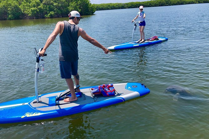 A 1hr nature tour discovering the marine environment of Tampa Bay while gliding through the mangrove islands of Weedon Island Nature Preserve. We use new Hobie Stand Up Pedalboards, which are very stable and easy to use. The boards are leg powered and have handlebars to maintain your balance. No previous experience is necessary to enjoy the sights from these boards.