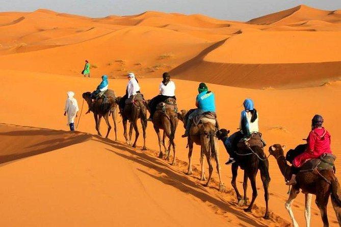 Paseo de camellos en Tanger, Tangier, MARRUECOS