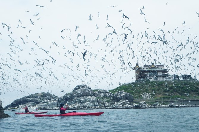 A sea kayak tour around Kabushima Island, a breeding ground for black-tailed gulls<br>Ride the calm waves to enjoy scenery that can only be seen from a sea kayak!
