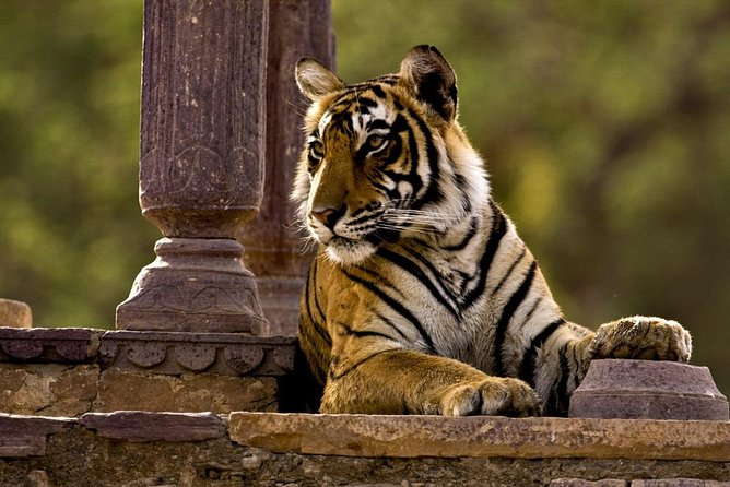 Looking for a quick drop off at Ranthambore then this Package is for you. We offer Pick Up from Any Hotel, Resort or Station in Mount Abu and Drop off in Ranthambore in Any Airport , Hotel, Resort or Station. We are flexible with the timings and Guest has to option to choose their own time slot as per their convenience.