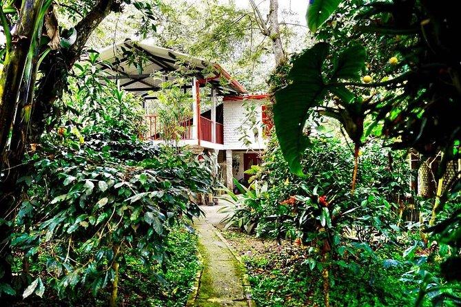 Coffee plantation at Fusagasuga from Bogota Private Tour FLEXIBLE SCHEDULE, Bogota, COLOMBIA