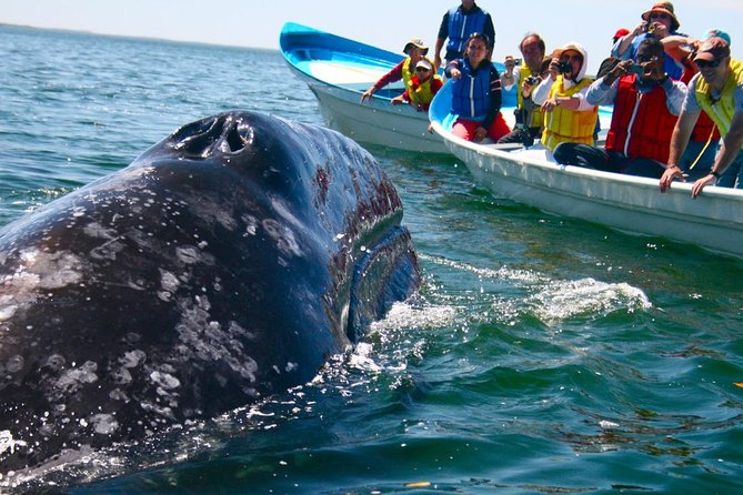 Whale watching isone of the most exciting water activities you can do while you are in Sri Lanka. In Sri Lanka you can watch whales and dolphins in Kalpitiya, Trincomalee and Mirissa, however <br>Mirissa is the major point you can see them in large numbers in October to April season.
