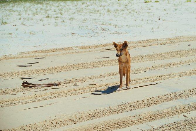 Dingos 3 Day Tag along Fraser Island 4WD Adventure, Rainbow Beach, AUSTRALIA