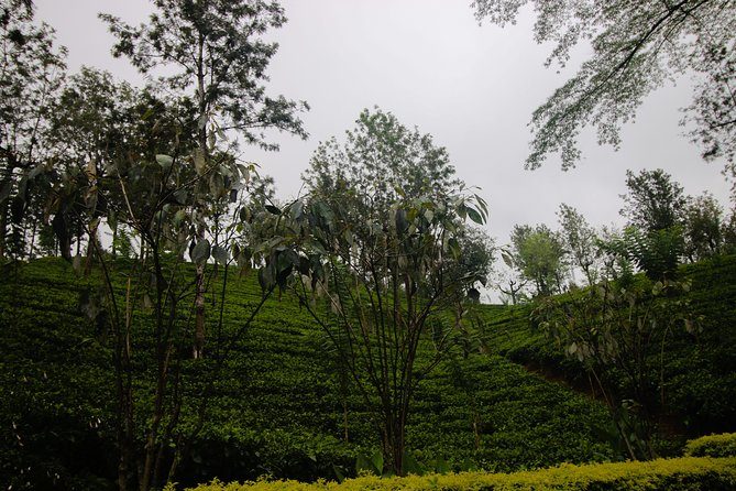 Kandy Day Tour from Colombo or Negombo by Private Car or Van with Driver, Negombo, SRI LANKA